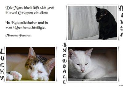 Nuestros gatos