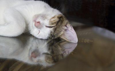 Meine Katzen, andere Tiere