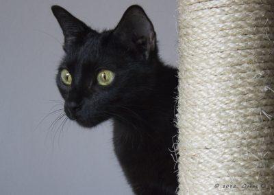 Katze Minca 02.01.2012