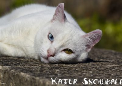 Kater Snowball