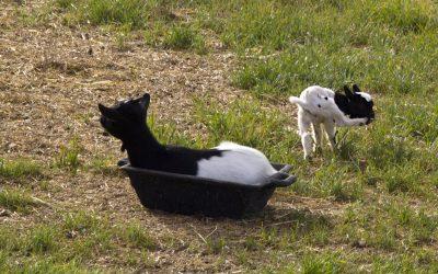 Meine Katzen und andere Tiere