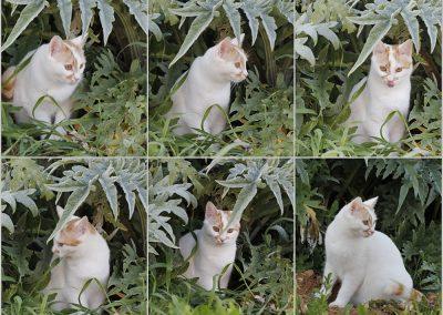 Gato Snowball
