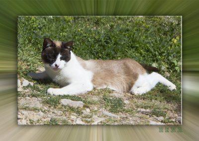 Katze Rena